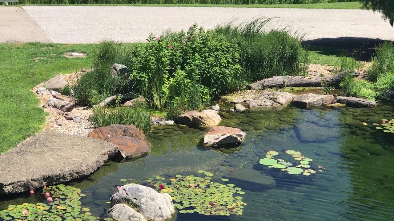 Stunning Signature Pond At Aquascape Youtube