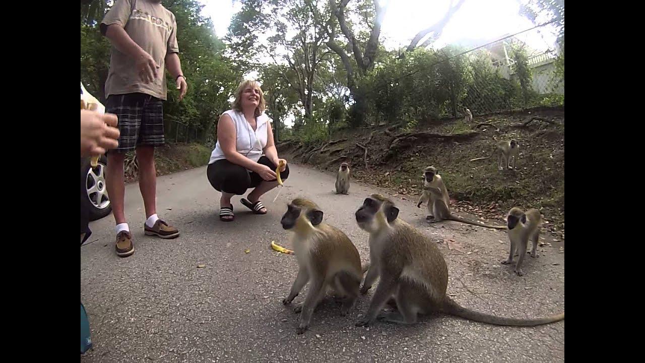 Risultati immagini per feeding monkeys