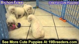 Bichon Frise, Puppies, For, Sale, In, Clifton, New Jersey, Nj, Morris, Passaic, Camden, Union, Ocean