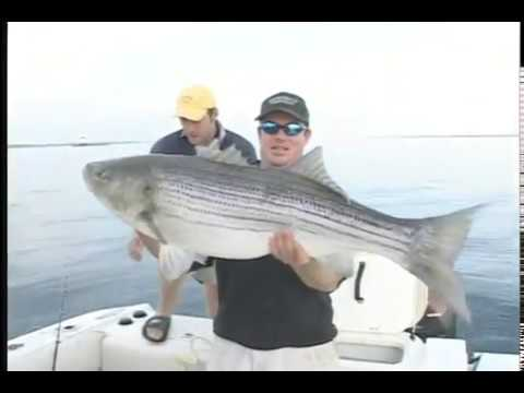 OTW Classic: Fishing Hickory Shad For Giant Stripers (2005)