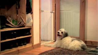 Dog Training Made Easy: Barking 15/25