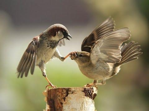 Top Funny Sparrow
