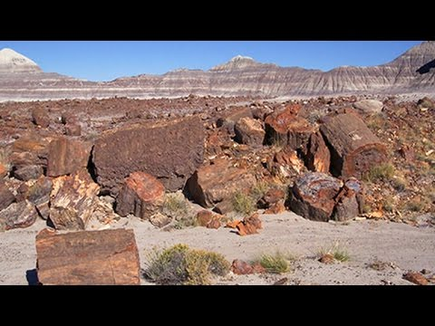 On The Trail: Petrified Forest National Park