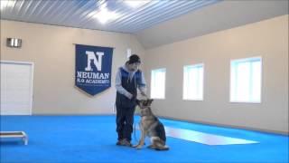 Lira (german Shepherd Dog) Trained Dog Video Minneapolis