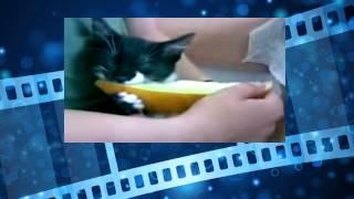 Смешные коты. Котэ отжигают! Funny Cat Videos
