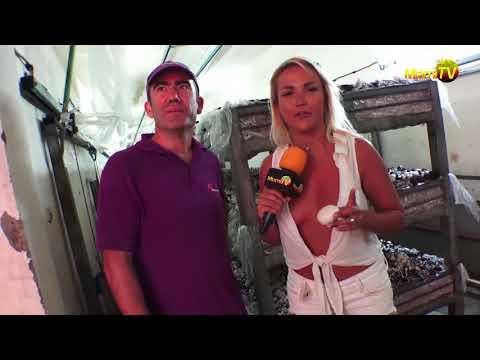Mushroom Heaven ! - Cosecha de Hongos - Miami TV - Jenny Scordamaglia