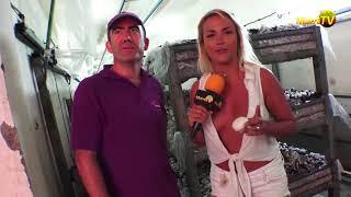 Mushroom Heaven !   Cosecha de Hongos   Miami TV   Jenny Scordamaglia