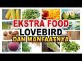 Wajib Tahu Inilah Manfaat Ekstra Food Ef Untuk Lovebird Dan Burung Lainnya  Mp3 - Mp4 Download