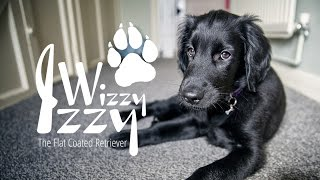Izzy's season of 'firsts'  teeth, bath, meeting other dogs and more!  (003)