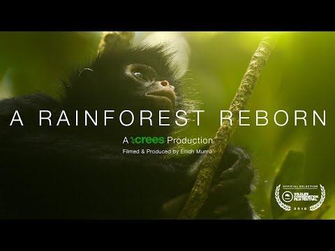 A Rainforest Reborn || Rare feeding behaviour of spider monkeys in a regenerating rainforest