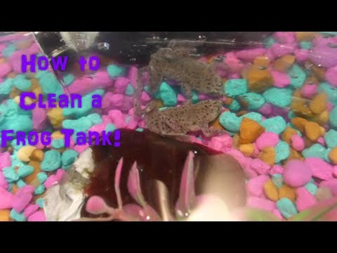 How to Clean a Frog Tank