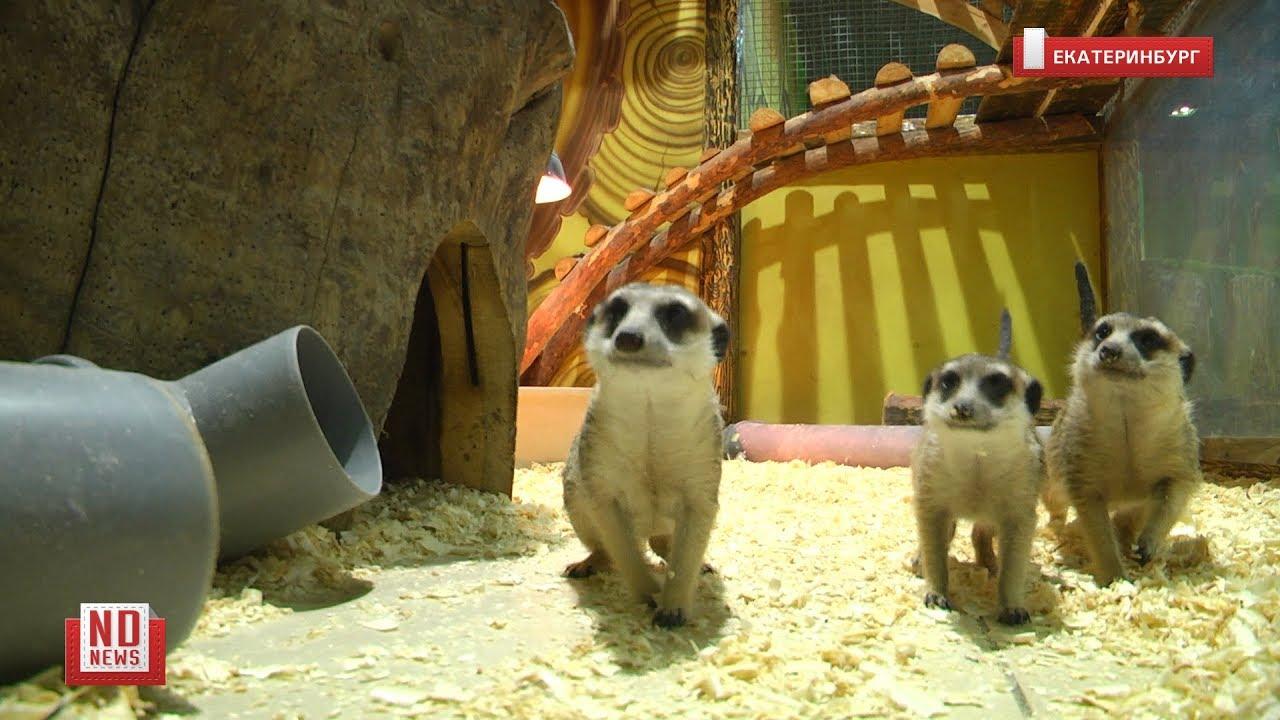 В зоопарках животные страдают без людей