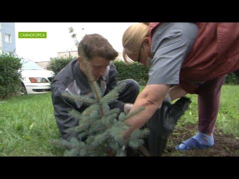 В Саяногорске завершаются мероприятия программы «Зеленая волна».