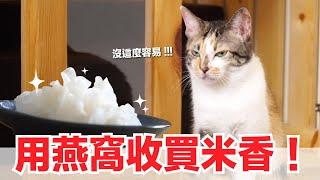 米香會被燕窩收買嗎-貓燕窩-貓副食食譜-好味貓鮮食廚房ep150