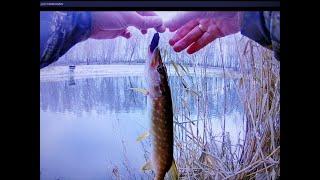 Ловля щуки на джиг с берега Декабрь 2020 Pike fishing