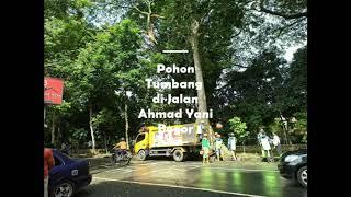 Download Pohon Tumbang di Jalan Ahmad Yani Bogor