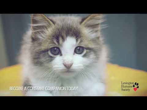 Monthly Giving | Lexington Humane Society