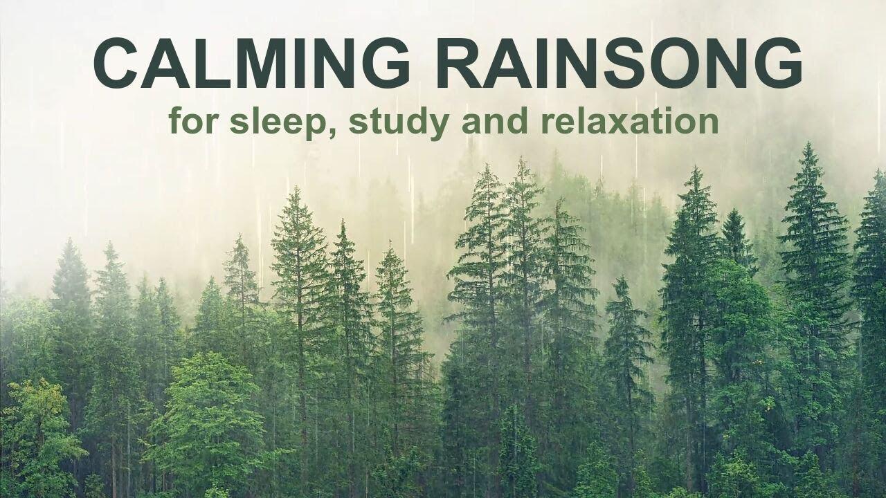 10 hours of calming rain with ambient New Zealand birdsong