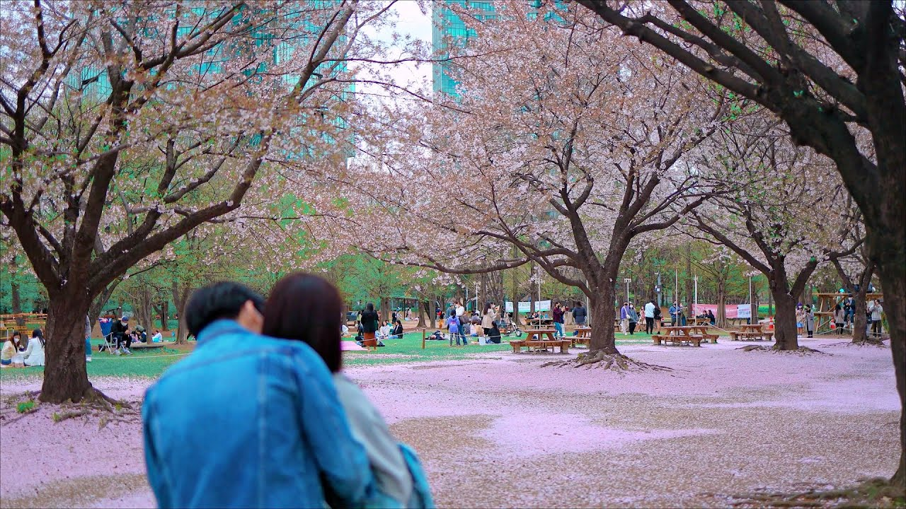 [4K] Seoul Walk - Seoul Forest Park  /  Cherry Blossom Photo Hot Place