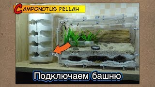 Феллахов битком, подключаем башню ● Camponotus fellah