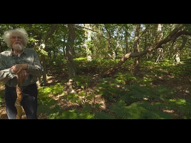 Natural forests - MYWORLD360