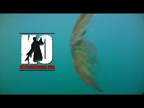 "Musky Fishing Adventures – Keyes Outdoors 2016 4th show ""Southwest Minnesota Muskies"""
