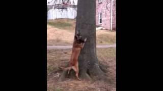Touch! Dog Training, Dc, Md, Va, Nc