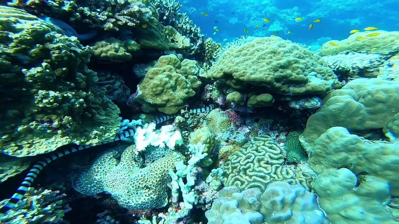 Cabilao Sanctuary Dive Resort