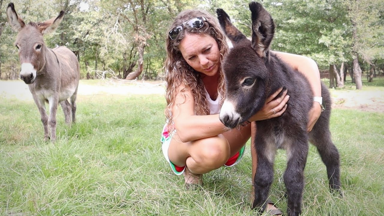 We Have a New BABY Miniature Donkey!