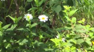 Видео и фото сделанные китайской камерой HDV-D9s(Мой блог: http://andersmith.ru Оригиналы видео и фото тут: https://yadi.sk/d/NBg_zjzdZawD5 Обзор камеры: ..., 2014-08-13T22:15:47.000Z)