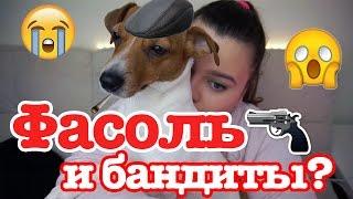 Как меня чуть не убили из-за моей собаки!!!