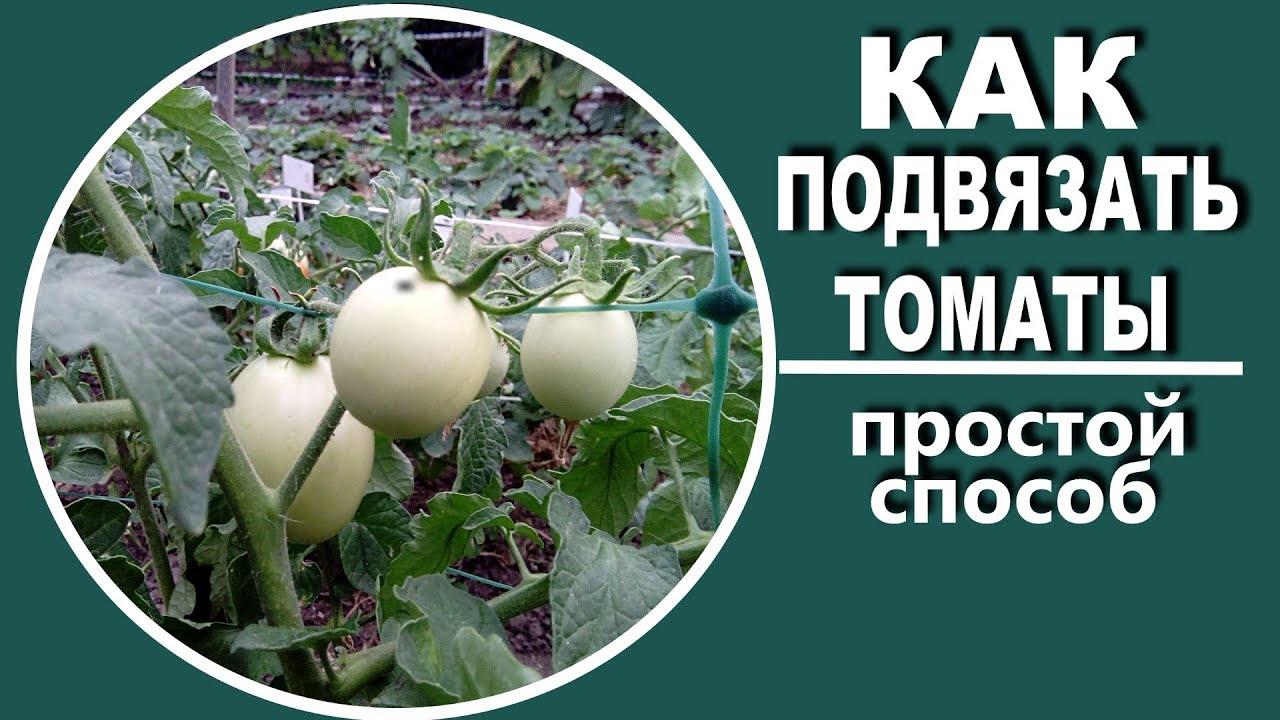 Семена[править | править код]. Семена мелкие, плоские, заострённые у основания, светло или тёмно-желтые,