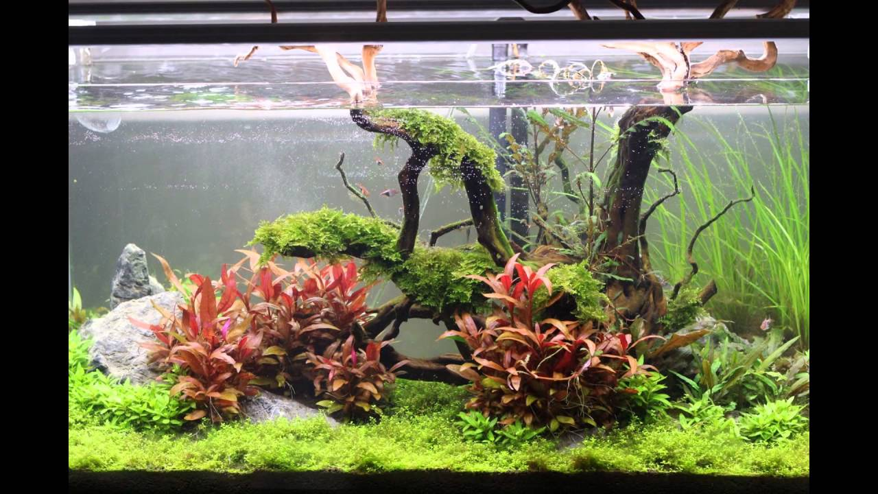 "ADA 90P aquascape progression ""Nature's Reach"" - YouTube"