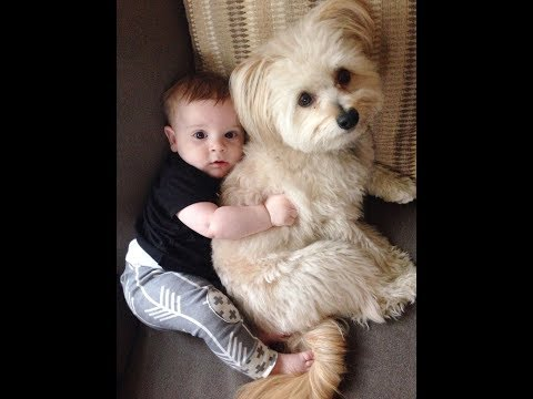 Dogs never fail to make you happy and smile – Dog and Baby Videos 2017
