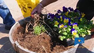 Project Longevity New Haven Community Clean Up