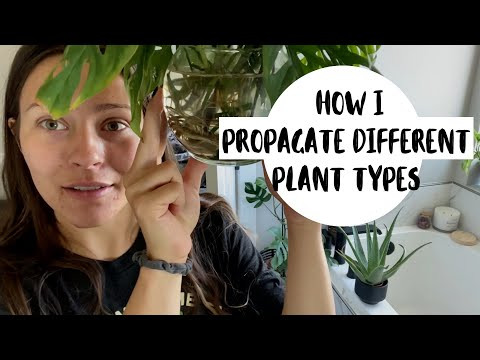 Grow Your Plant Collection for FREE! | HOW TO PROPAGATE HOUSEPLANTS FROM CUTTINGS!