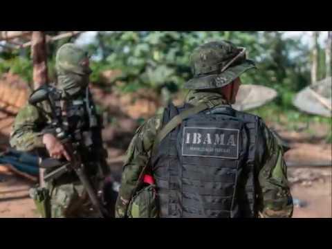 A luta dos servidores do IBAMA para proteger a Amazônia e os povos indígenas.