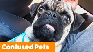Confused Pets | Funny Pet Videos
