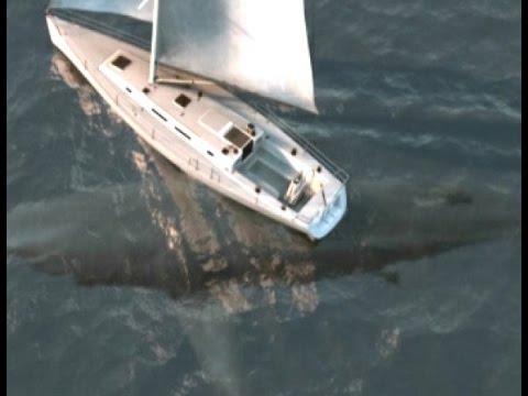 Worlds Biggest Shark Megalodon Caught On Camera