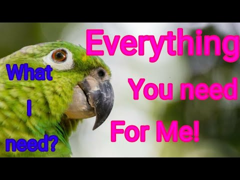 Everything you need before buying a bird || Which  things you should buy for your birds?