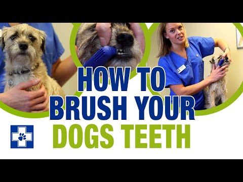 how-to-brush-your-dogs-teeth