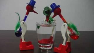 Drinking Bird In Action
