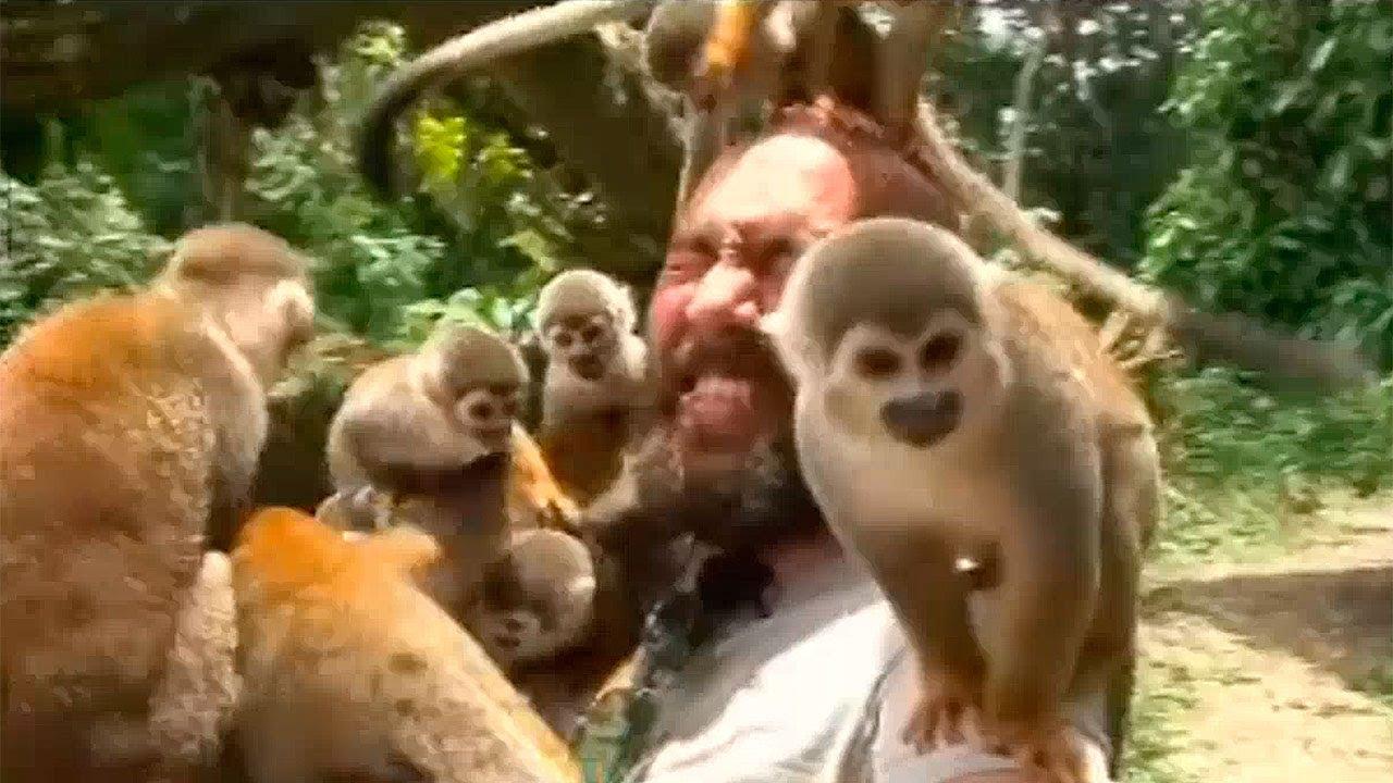 Animales Por El Mundo La Isla De Los Micos En El Amazonas