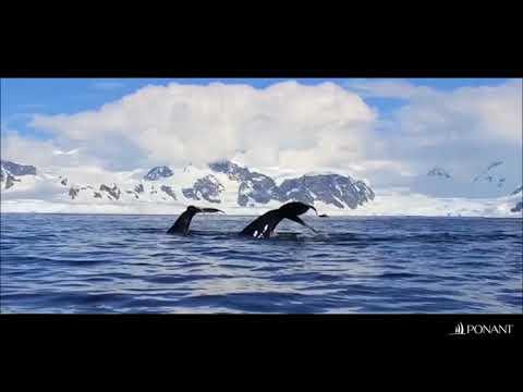 Discover Antarctica with Ponant Luxury Cruises