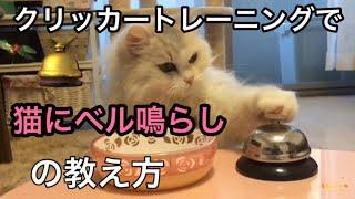 ネコにクリッカートレーニングでベル鳴らしを教える方法 How to Teach a Cat to Ring a Bell in Clicker Training