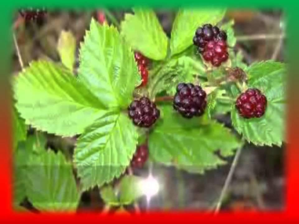 Фото растений из красной книги