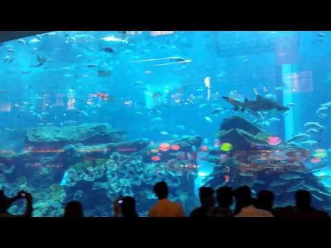 Mall Of Dubai Aquarium 2014 UAE
