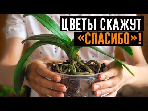 Ваша орхидея будет цвести круглый год! 4 важных секрета по уходу!