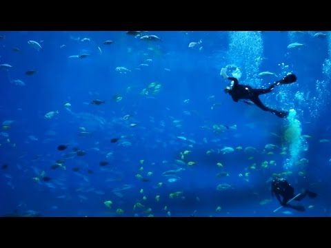 6 Hour Relaxing HD Aquarium Screensaver with Ambient Sound + Scuba Divers!