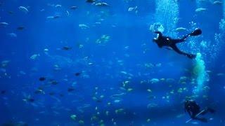 Ocean Voyager Aquarium II - 6 HOUR Aquarium with Ambient Sound